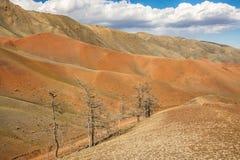 Bomen die op hoge bergheuvel groeien Royalty-vrije Stock Foto