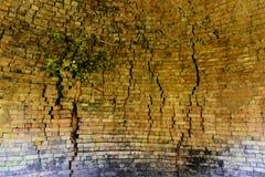 Bomen die op oude muren groeien Royalty-vrije Stock Afbeelding