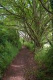 Bomen die over de Weg bereiken Royalty-vrije Stock Foto's