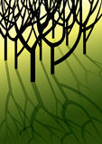 Bomen die schaduwen op gras gieten Royalty-vrije Stock Fotografie