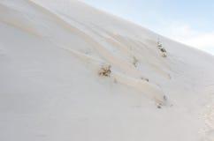 Bomen die in sneeuw worden behandeld Stock Afbeelding