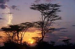 Bomen die tegen de zon worden gesilhouetteerd. Royalty-vrije Stock Foto's