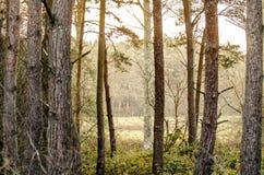 Bomen die tevreden Royalty-vrije Stock Foto's