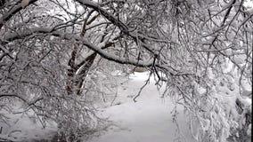 Bomen die van gewicht van sneeuw buigen stock videobeelden