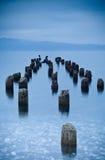 Bomen die in water worden ondergedompeld stock fotografie
