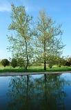 Bomen die in water worden weerspiegeld Royalty-vrije Stock Fotografie