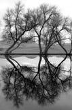 Bomen die in Water worden weerspiegeld Stock Foto's
