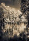 Bomen die zich in de rivier bevinden Royalty-vrije Stock Fotografie