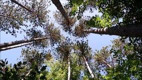 Bomen die zich door de wind bewegen stock videobeelden
