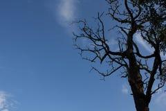Bomen, dode bomen Stock Foto
