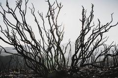 Bomen Dode backlight Royalty-vrije Stock Foto's
