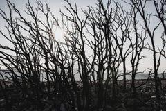 Bomen Dode backlight Stock Afbeeldingen