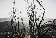 Bomen Dode backlight Stock Foto