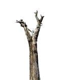 Bomen, dode bomen Royalty-vrije Stock Afbeelding