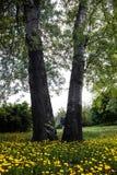 Bomen door bloeiende gele paardebloemen worden omringd die Royalty-vrije Stock Foto