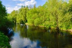 Bomen door de rivier Stock Foto