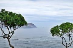 Bomen door de vreedzame kust stock foto's
