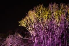 Bomen door gekleurde schijnwerpers worden aangestoken die Stock Afbeelding