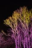 Bomen door gekleurde schijnwerpers worden aangestoken die Stock Afbeeldingen