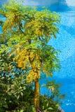 Bomen door het zwembad royalty-vrije stock foto's