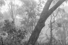 Bomen door mist worden omringd - Blauwe Bergen, Australië dat Royalty-vrije Stock Fotografie