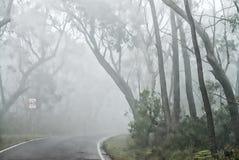 Bomen door mist worden omringd - Blauwe Bergen, Australië dat Royalty-vrije Stock Foto
