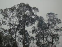 Bomen door mistsilhouet worden behandeld in kodaaikanal die van de heuvelpost Royalty-vrije Stock Afbeeldingen