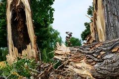 Bomen door onweer worden vernietigd dat Stock Fotografie