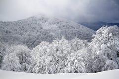Bomen door sneeuw, de Vogezen-berg, Frankrijk worden behandeld dat Royalty-vrije Stock Foto's