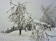 Bomen door sneeuw met grijze hemelachtergrond die worden behandeld stock fotografie