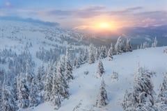 Bomen door sneeuw op bergheuvel die worden behandeld royalty-vrije stock foto's