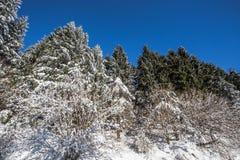 Bomen door sneeuw in wintertijd onder een mooie blauwe hemel worden behandeld die royalty-vrije stock afbeeldingen