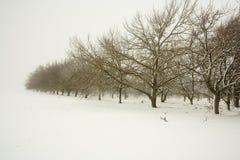 Bomen in een boomgaard stock fotografie