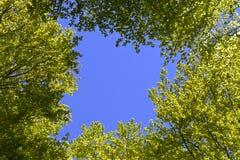 Bomen in een bos Royalty-vrije Stock Foto's