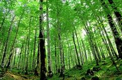 Bomen in een bos Stock Foto's
