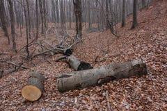 Bomen in een bos worden gesneden dat royalty-vrije stock foto