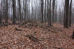 Bomen in een bos worden gesneden dat stock afbeeldingen