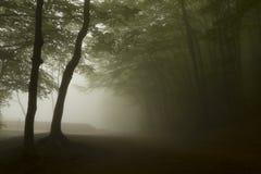 Bomen in een donker bos met groene mist Royalty-vrije Stock Foto's
