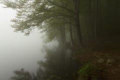 Bomen in een donker bos met groene mist Royalty-vrije Stock Afbeelding