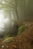 Bomen in een donker bos met groene mist Royalty-vrije Stock Fotografie