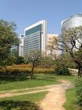 Bomen in een groen park in Tokyo Stock Fotografie