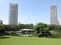 Bomen in een groen park in Tokyo Stock Foto