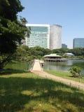 Bomen in een groen park in Tokyo Stock Afbeelding
