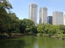 Bomen in een groen park in Tokyo Stock Afbeeldingen