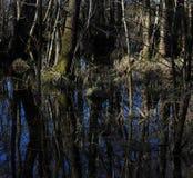 Bomen in een moeras royalty-vrije stock fotografie