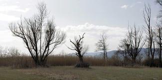 Bomen in een moeras royalty-vrije stock foto's
