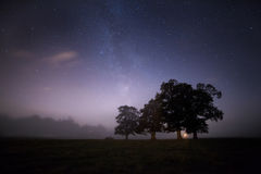 Bomen in een nevelige hemel Royalty-vrije Stock Fotografie