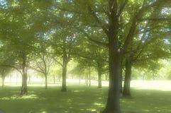 Bomen in een Park royalty-vrije stock afbeelding