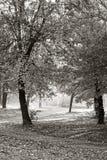 Bomen in een park Stock Afbeeldingen
