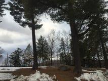 Bomen in een Park Stock Afbeelding